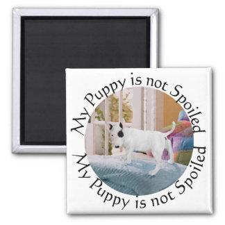 Spoiled? Bull Terrier Puppy . . . Not 2 Inch Square Magnet