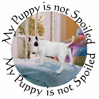 Spoiled? Bull Terrier Puppy . . . Not Standing Photo Sculpture