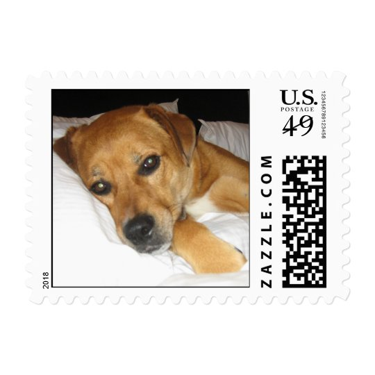 spoiled dog on bed postage