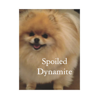 Spoiled dynamite pomeranian wrapped canvas print
