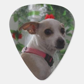 Spoiled Litle Chihuahua Guitar Pick