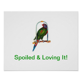 Spoiled Parrot Poster