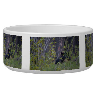 Spooky Bear Bowl