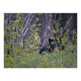 Spooky Bear Photo Print