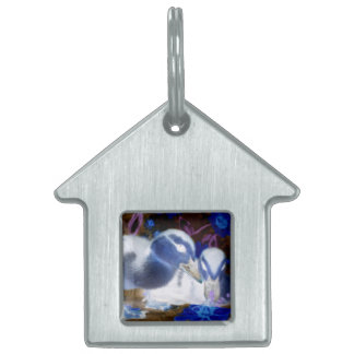 Spooky blue and white baby ducks pet ID tag
