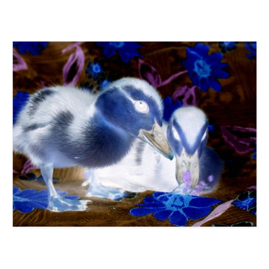 Spooky blue and white baby ducks postcard