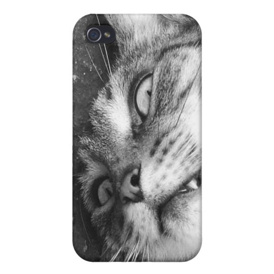 Spooky cat iPhone 4/4S cases