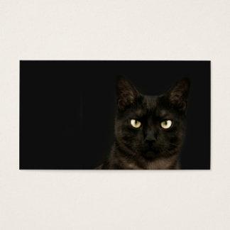 spooky cat profile card