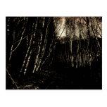 Spooky Darkened Forest Postcard
