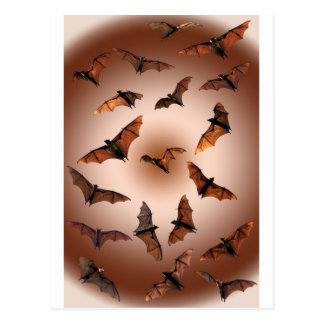 Spooky Halloween Fruit Bats (Flying foxes) Postcard