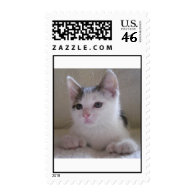 Spooky, Hemingway Polydactyl Postage Stamp