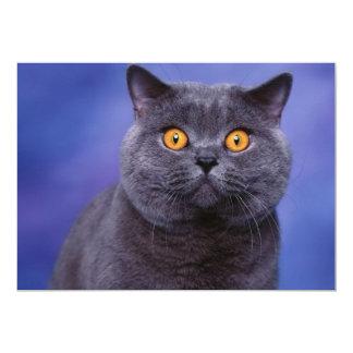 Spooky Kitty Wide Eyed Card
