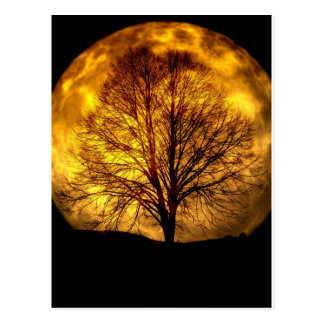 Spooky Night Moon Tree Autumn Destiny Gifts Postcard