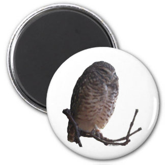 Spooky Old Owl 2 Inch Round Magnet
