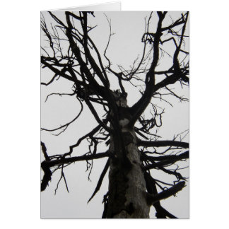 Spooky Old Tree Cards