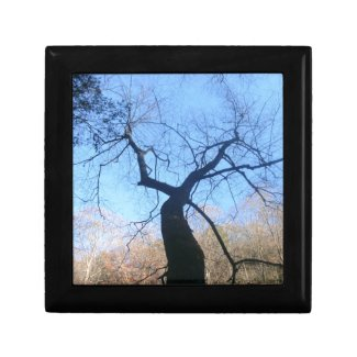 Spooky Tree Keepsake Box