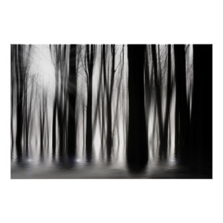 Spooky woods in black and white poster