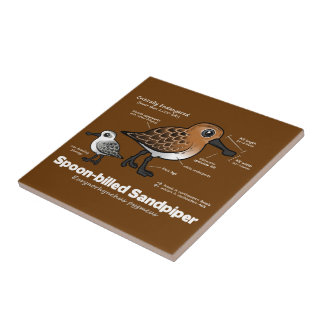 Spoon-billed Sandpiper Statistics Tile