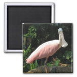 Spoonbill 2 Inch Square Magnet