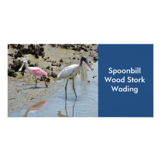 Spoonbill and Wood Stork wading Card
