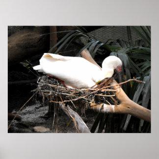 Spoonbill bird on nest in Spain Poster