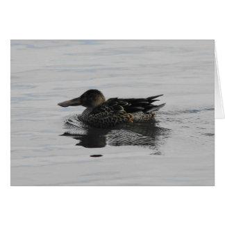 Spoonbill Duck Card