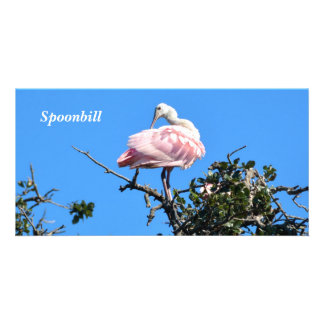 Spoonbill in the wild nesting it's young card