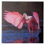 Spoonbill rosado (ajaja del Ajaia) con el cormorán Azulejo Cuadrado Grande