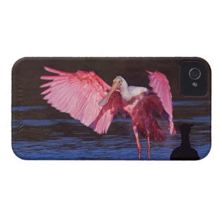 Spoonbill rosado (ajaja del Ajaia) con el cormorán Case-Mate iPhone 4 Fundas