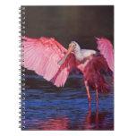 Spoonbill rosado (ajaja del Ajaia) con el cormorán Spiral Notebook