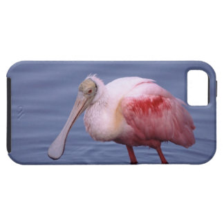 Spoonbill rosado (ajaja del Ajaia) Funda Para iPhone 5 Tough