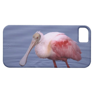 Spoonbill rosado (ajaja del Ajaia) iPhone 5 Carcasas