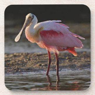 Spoonbill rosado, ajaja del Ajaia, querido del til Posavasos De Bebida