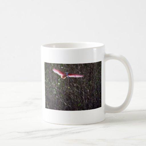 Spoonbill rosado, aterrizando tazas
