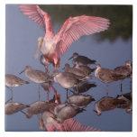 Spoonbill rosado con Willets en agua poco profunda Azulejos Cerámicos