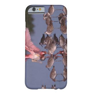 Spoonbill rosado con Willets en agua poco profunda Funda Para iPhone 6 Barely There
