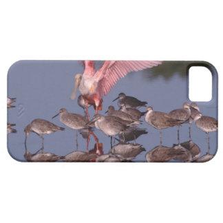 Spoonbill rosado con Willets en agua poco profunda iPhone 5 Funda