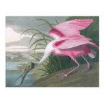 Spoonbill rosado, John James Audubon Postal