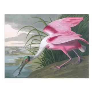 Spoonbill rosado John James Audubon Postal