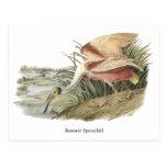 Spoonbill rosado, Juan Audubon Tarjetas Postales