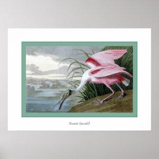 Spoonbill rosado poster