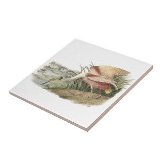 Spoonbill rosado por Audubon Azulejo Cuadrado Pequeño