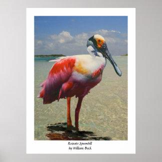 Spoonbill rosado por el Bock de Guillermo Posters