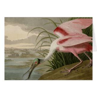 Spoonbill rosado tarjeta de felicitación