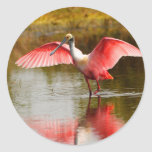 spoonbill round stickers