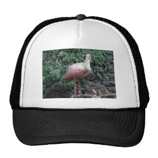 spoonbill trucker hat
