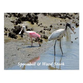 Spoonbill y cigüeña de madera en el salvaje tarjeta postal