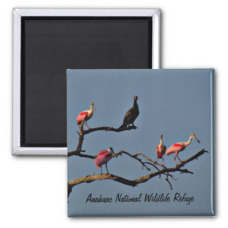 Spoonbills and Cormorant Magnet