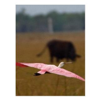 Spoonbills Flying Postcard