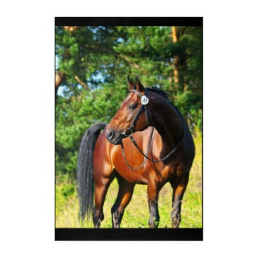 anakondasp sportive horse acrylic wall art